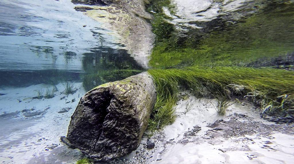 Beneath the Surface of Blue Run