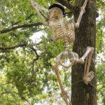 Skeleton in Tree