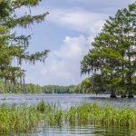 Tsala Apopka Lake - Hampton Lake