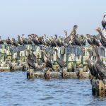 Birds of a Feather - Atsena Otie