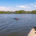 Dolphin Atsena Otie