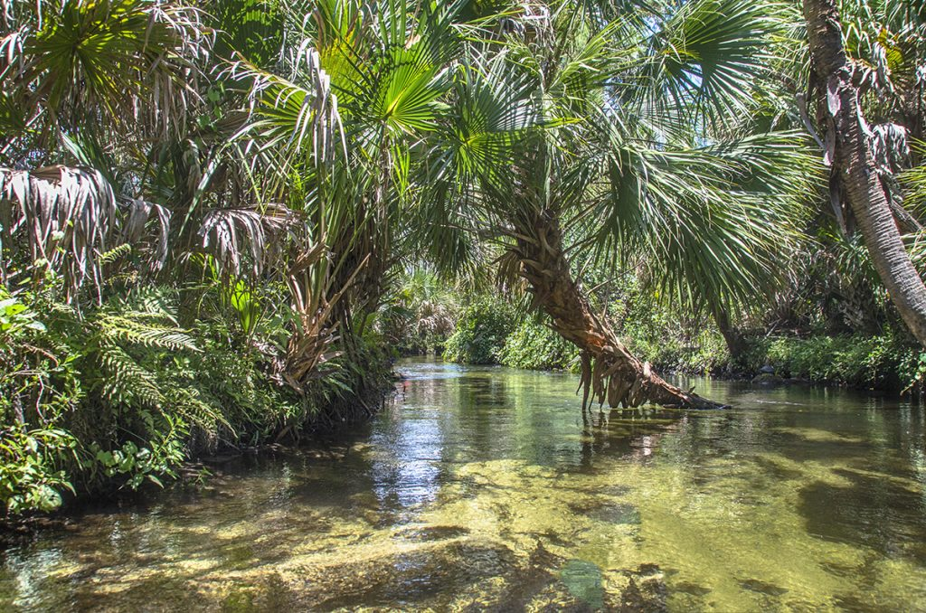 Juniper Springs Run