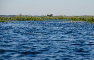 A flooded Paynes Prairie