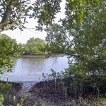 Cemetery trail to marsh - Atsena Otie