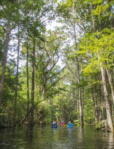 Paddling Prairie Creek