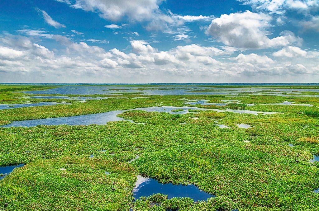 Payne's Prairie - Alachua Lake