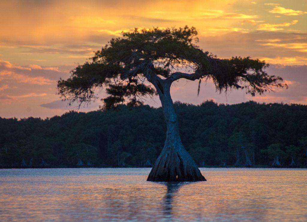 Sunset Cypress - Lake Disston