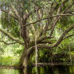 The Oak on Prairie Creek