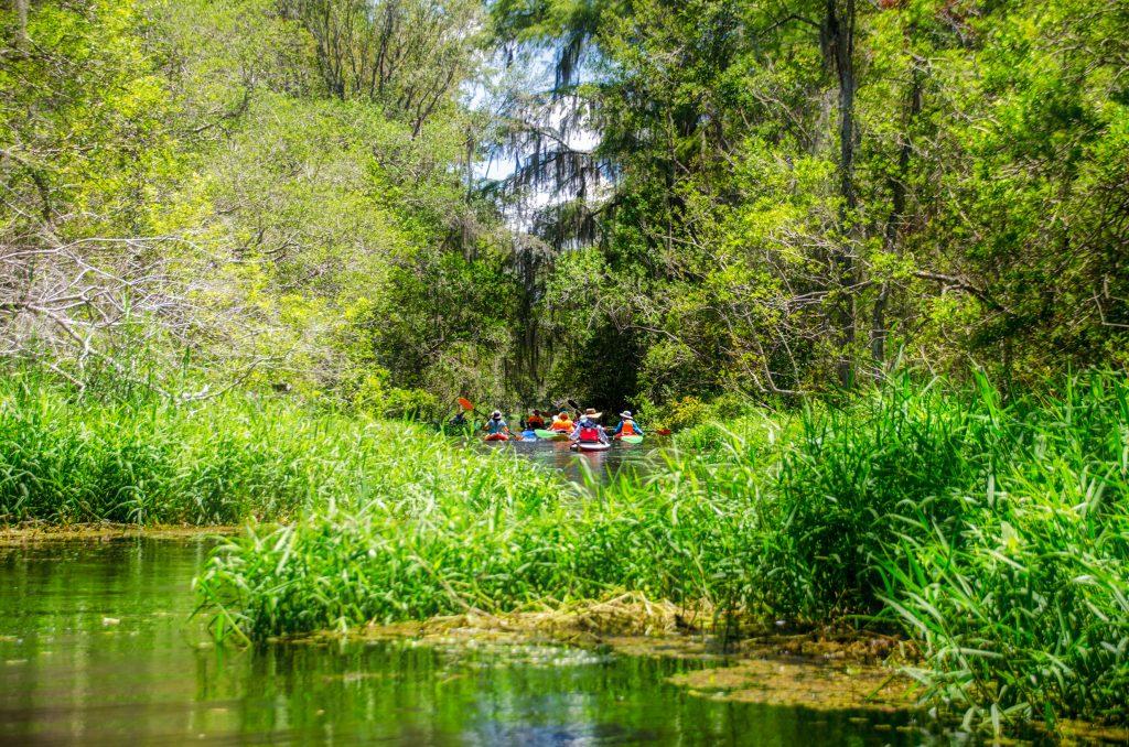 Lush growth on the Santa Fe Canal