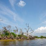 Twisted Shoreline