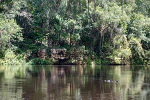 Withlacoochee River -Limerock Shoreline