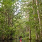 Donna Dwarfed by Cypress