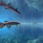 Florida Gar - Lepisosteus platyrhincus