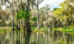 Lone Paddler on the Withlacoochee
