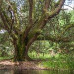 Oak Tree Rest Stop