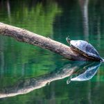 Turtle and Damsel Fly
