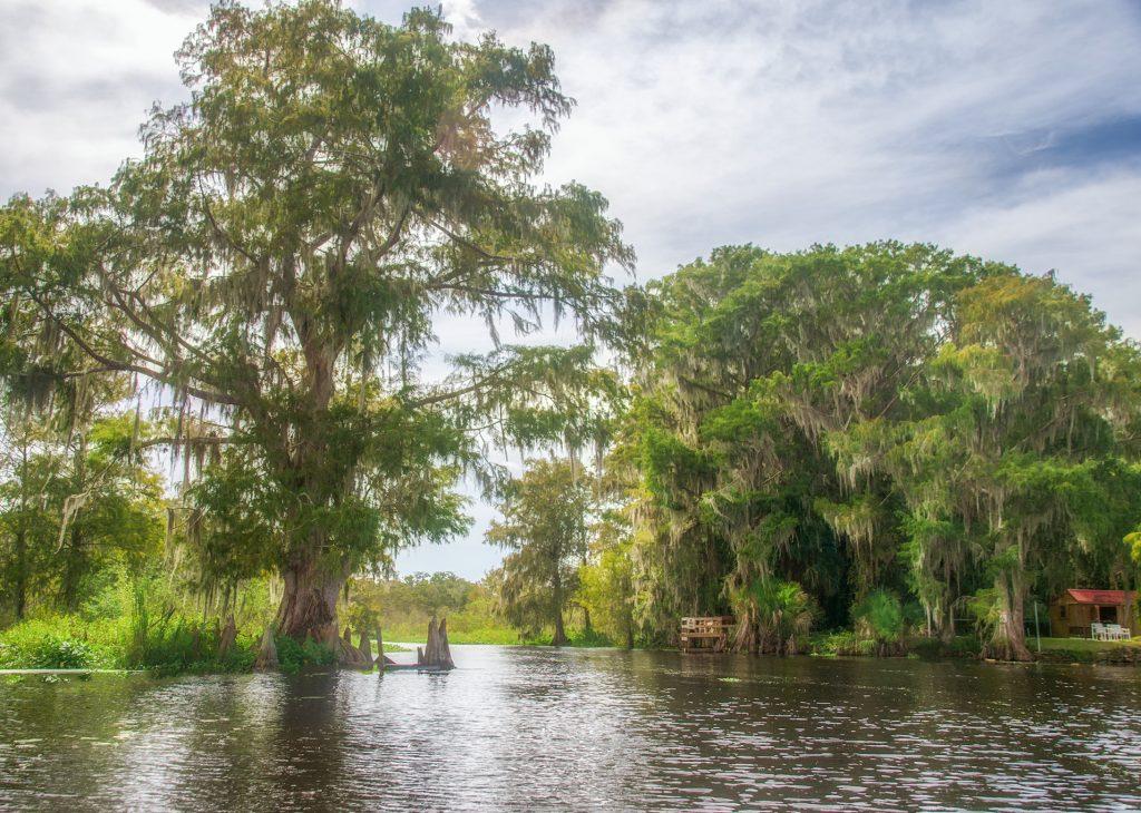 Cross Creek Cypress