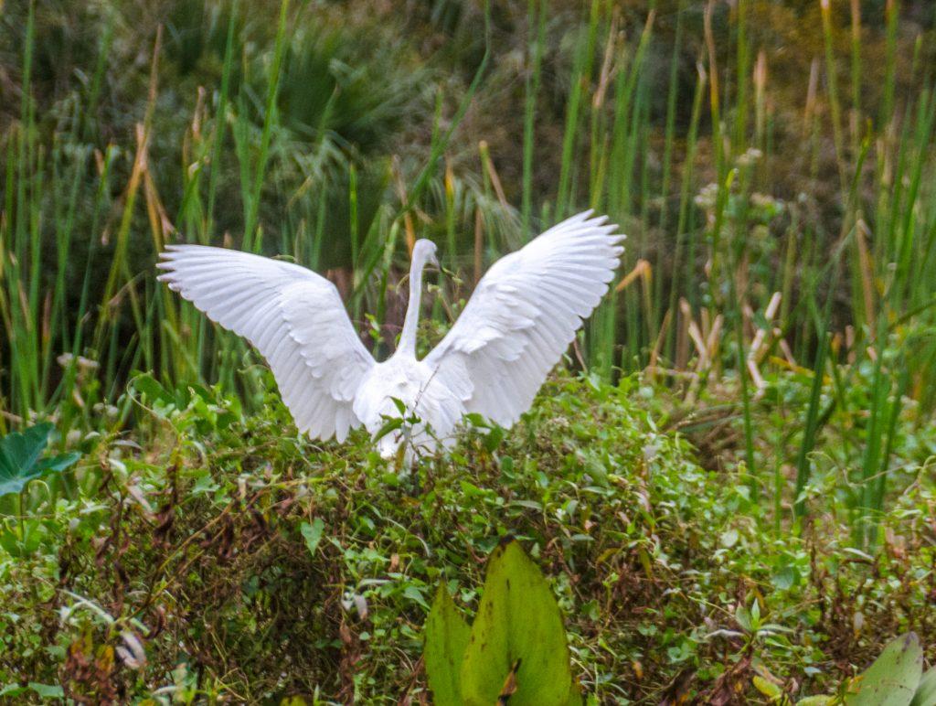 White Heron Lands