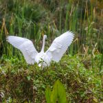 White Heron Lands