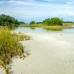 Cedar Keys Landscape