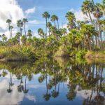 Bulow Creek Palms