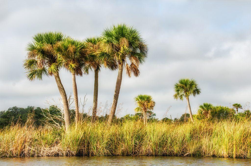 Palms on Bulow Creek
