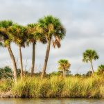 Palms on Bulow Creek