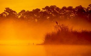 Sunrise Mist on Salt Springs Run