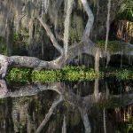 Oak reflects over Slat Creek Run