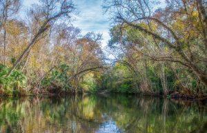 Trees along the Ocklawaha