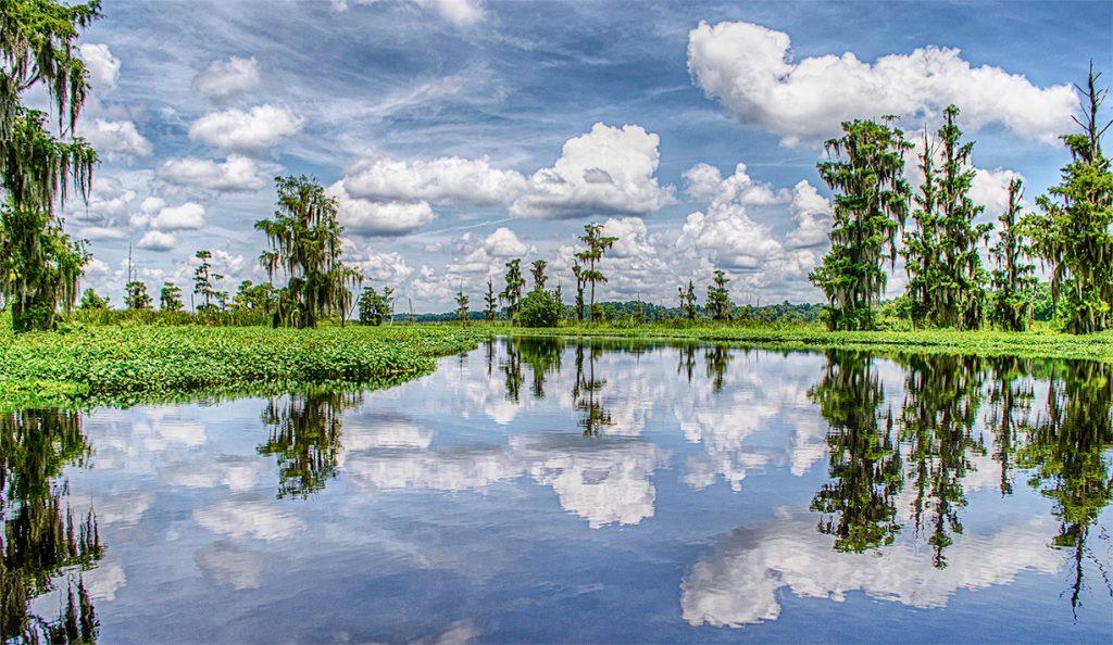 An Ocklawaha Landscape