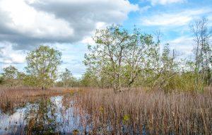 Black Lake Wetland