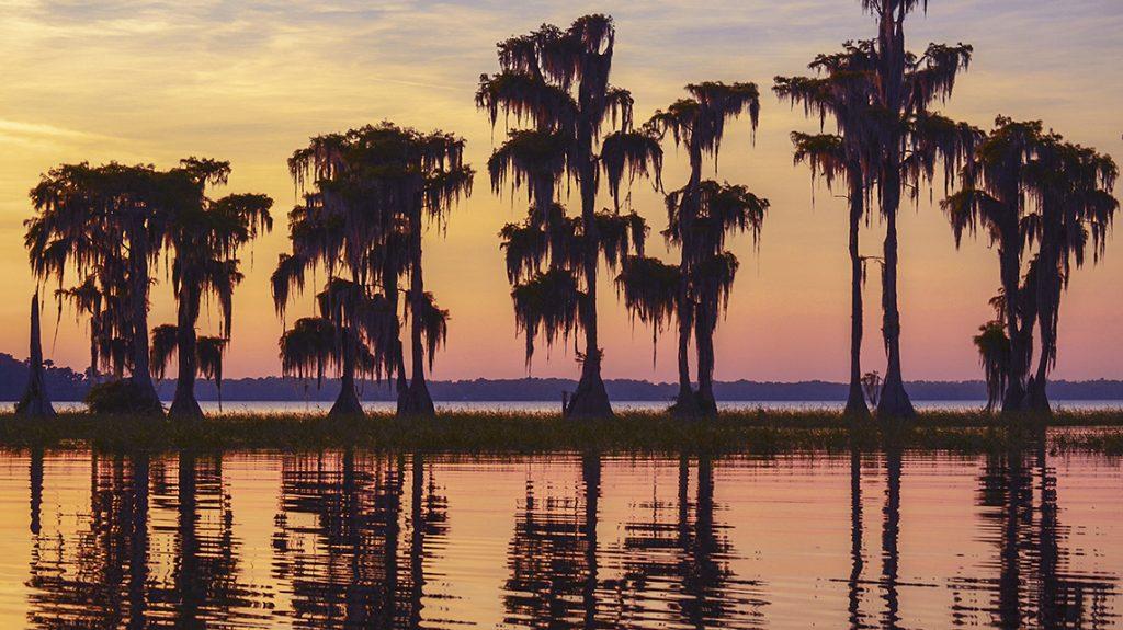 Cypress Silhouette Sunset - Santa Fe Lake