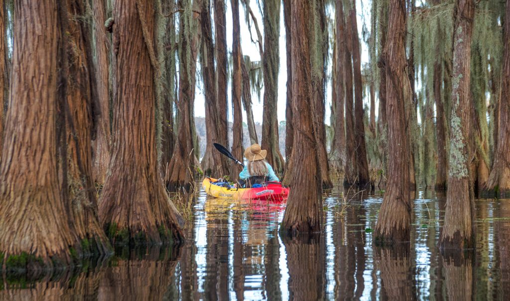 Donna paddles among the Cypress