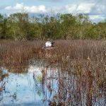 James in the rush - Black Lake Wetland