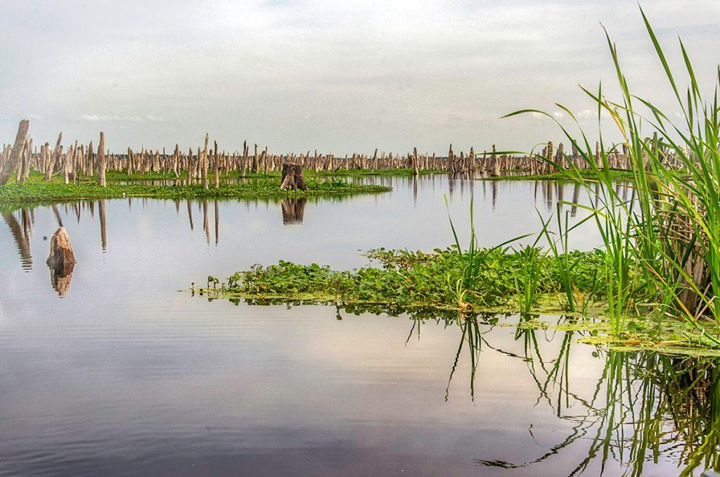 Original Ocklawaha River