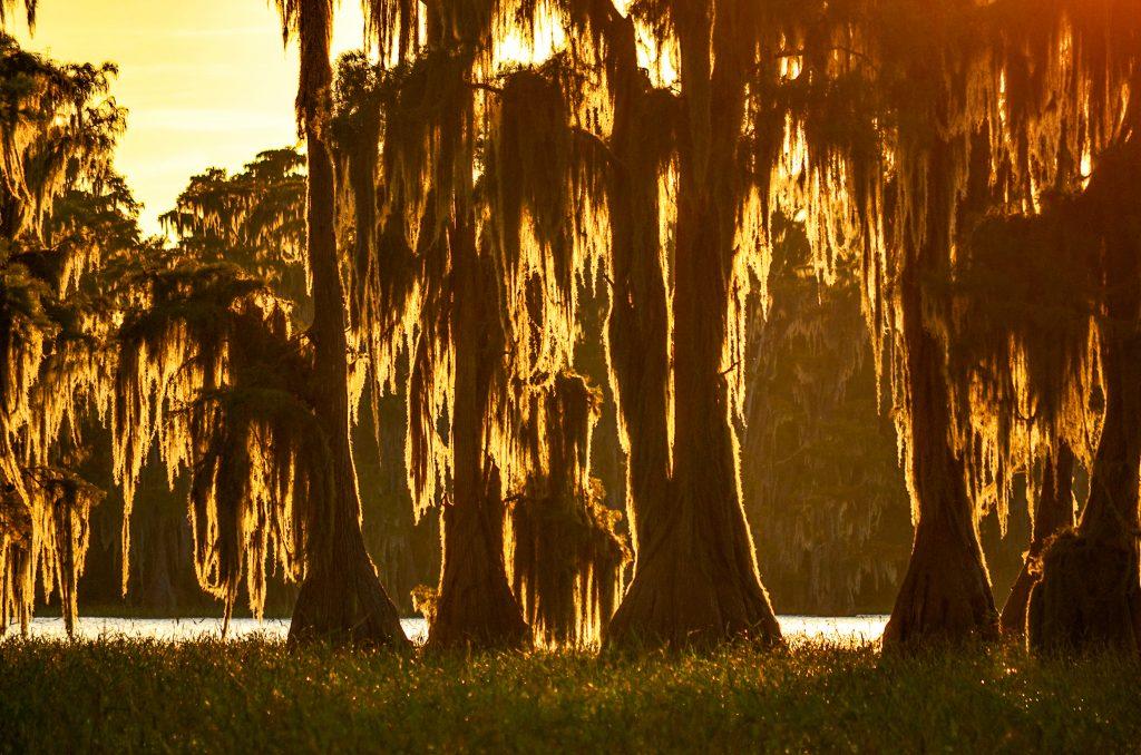 Sunset Glow through Moss