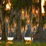 Mossy Cypress at Sunset - Santa Fe Lake