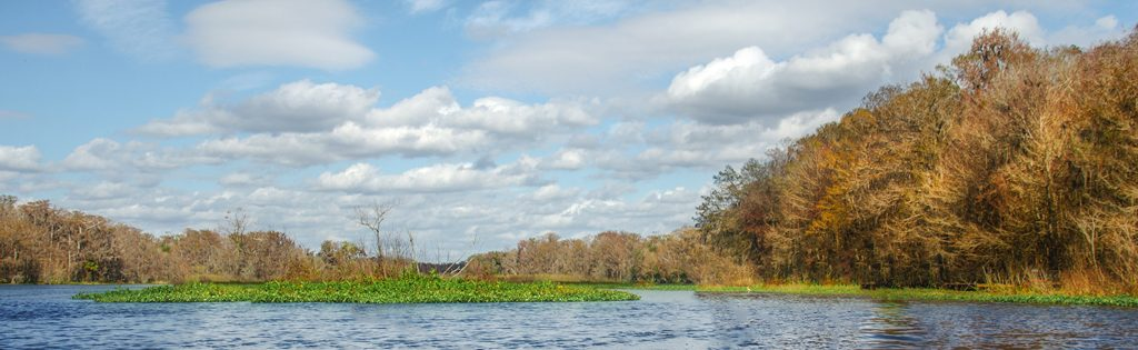 Withlacoochee River Banner
