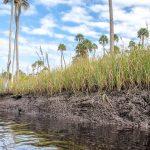 Sawgrass Low Tide