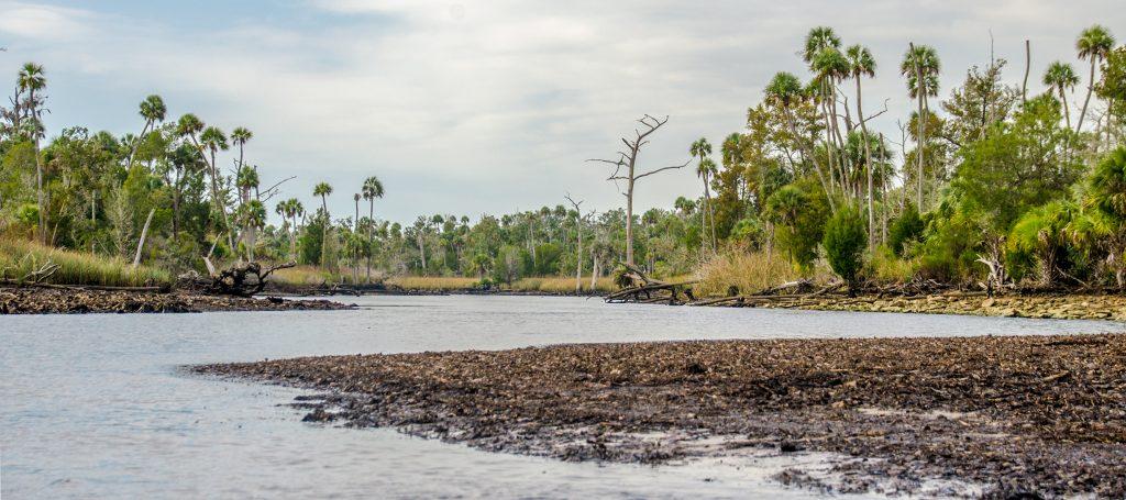 The Waccasassa River