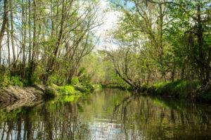 Alligator Creek near Starke