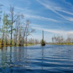 Okeefenokee Waterway