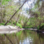 Sandy Banks on Alligator Creek