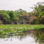 Alexander Spring Creek Bridge