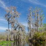 Okefenokee Swamp Trail