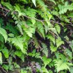 Wall of Ferns