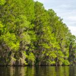 Cypress Shoreline - Floral City Lake