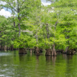 Mouth of the Ichetucknee River
