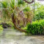 Palm over Juniper Creek